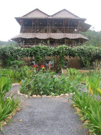 The Vine Retreat: view of the vine