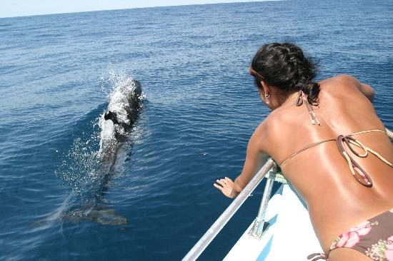 Drake Bay, Costa Rica: Close Encounters of the BEST kind!