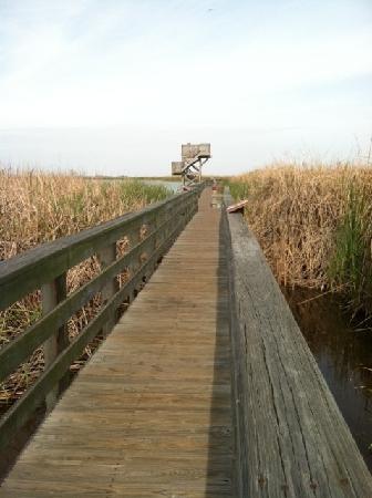 Leonabelle Turnbull Birding Center: Boardwalk view