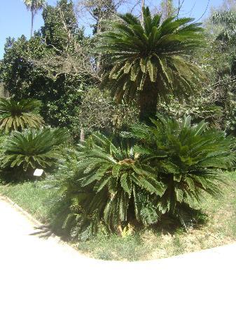Le Jardin d'Essai du Hamma 사진