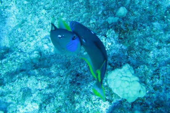 Kona Diving Company: Dancing fish