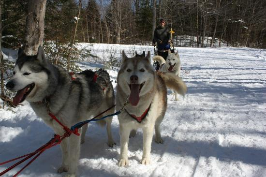 Braeburn Siberians: Mish and Ben want to hit the trail.