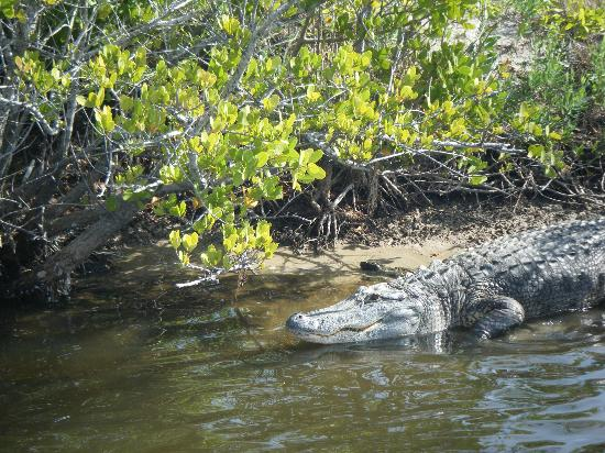 Fish Tales Tours : Big Gator