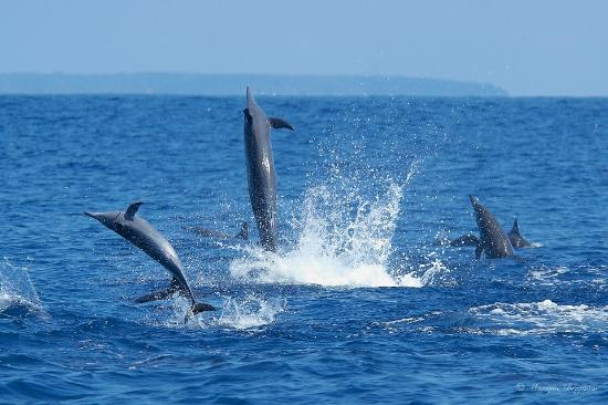 Drake Bay, Costa Rica: Spinner Dolphin joy