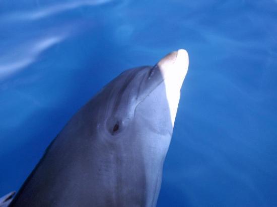 Drake Bay, Costa Rica: Bottlenose Dolphin Love