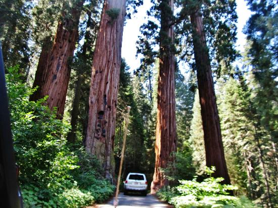 Sequoia RV Ranch: Giant Sequoias
