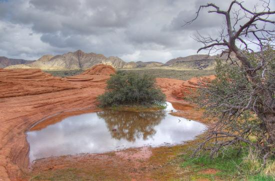 Snow Canyon State Park: Reflective pond