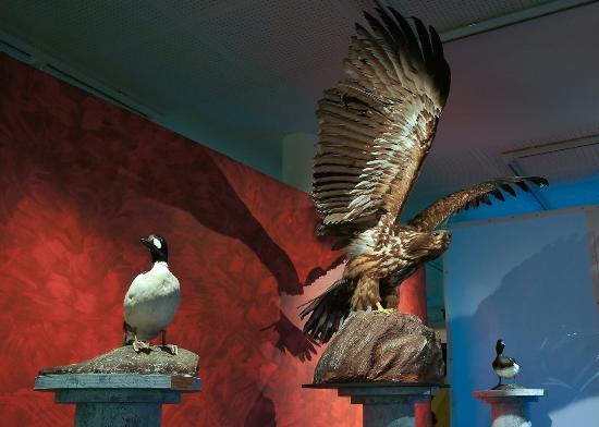 Vapriikin Museokeskus: Birds of Finlad exhibition