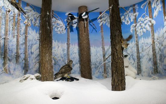 Vapriikin Museokeskus: Museum of Natural History
