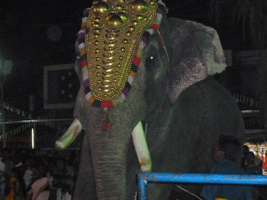 Ashtamudi Homestay: elephant in festival