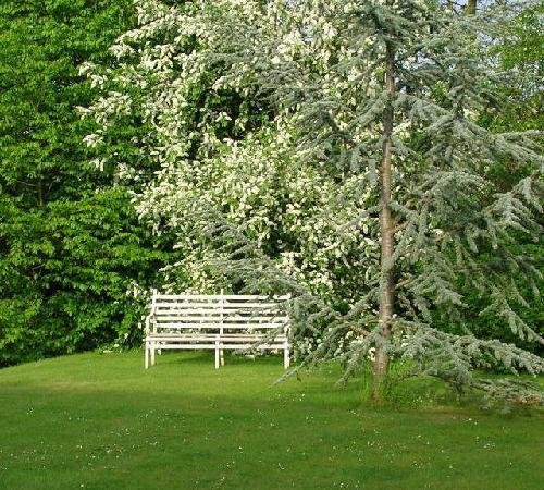 Larks Rise: Somewhere quiet to sit...