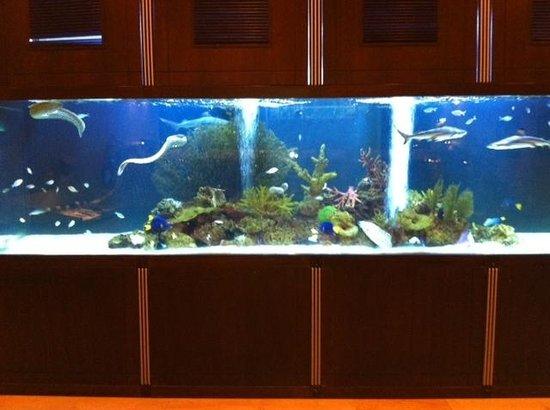 Ocean : super aquarium a l'entrée du restaurant