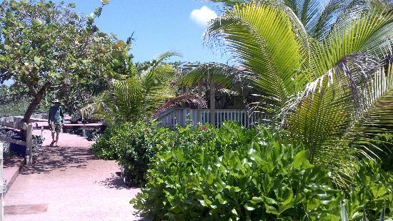 Seagrape Plantation Resort: Gentle Breezes in Oceanfront Cabins