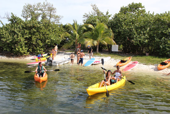 Miami Catamarans - Kayaks & Paddleboards Eco Tours: Kayaks or Paddleboard for a fun paddle in the Harbor of Coconut Grove