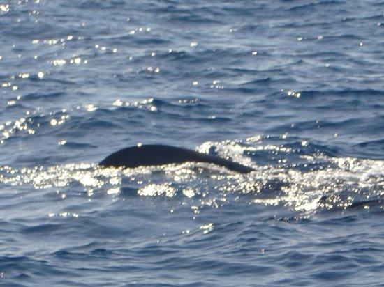 Whale Adventure