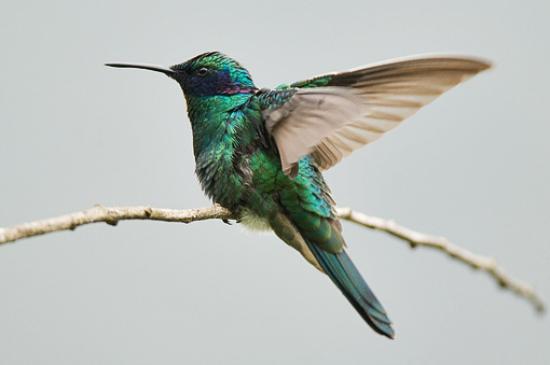 La Casa Amarilla: In the garden is a lot of birds.