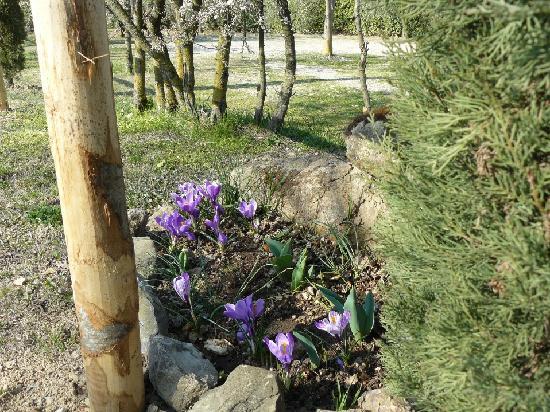 Agriturismo il Palazzo dei Diavoli: il primo giorno di primavera 2012  ..crochi in fiore