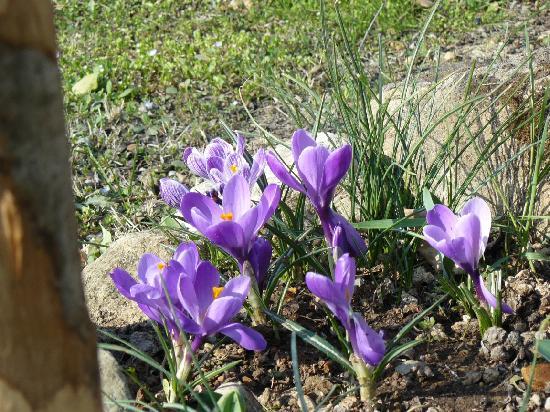 Agriturismo il Palazzo dei Diavoli: primavera