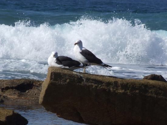 Beachcomber Bay: Gulls by the surf