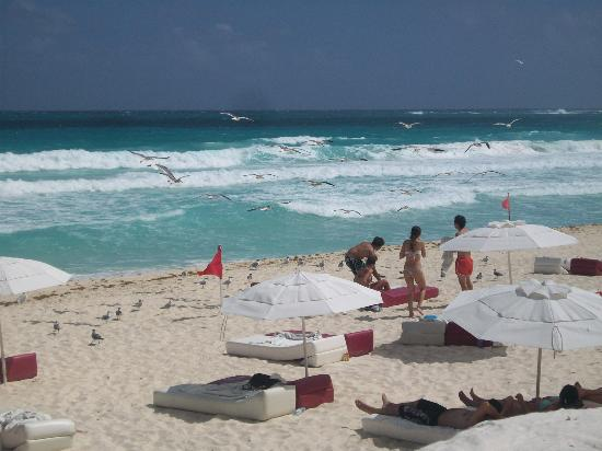 Bel Air Collection Resort & Spa Cancun: Playa