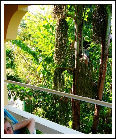 Seastar Inn: beautiful balcony and hammock