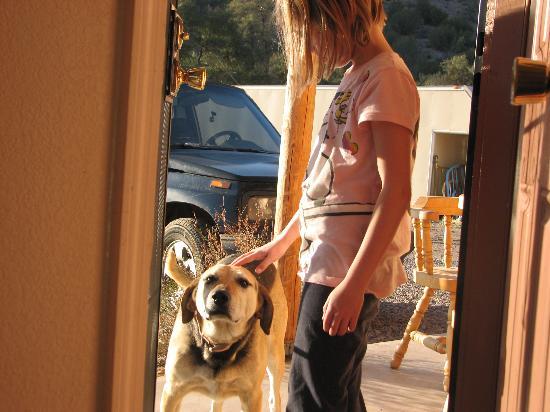 Double T Homestead: Cutie the greeter dog