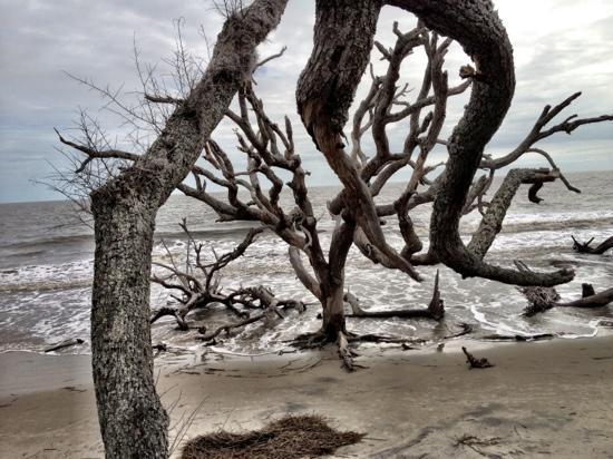 Jekyll Island Campground: Driftwood Beach