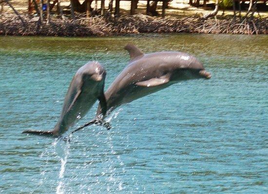 Sandy Bay, Honduras: AKR Dolphin Show