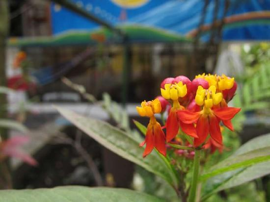 Hostal Timara: Flowers in the yard / flores afuera