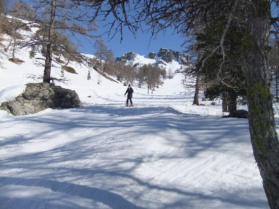 Hotel Alpis Cottia: Wide open, empty, tree lined pistes