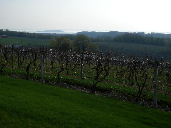 Chateau Chantal Winery and Inn: My favorite grapes, the reisling!