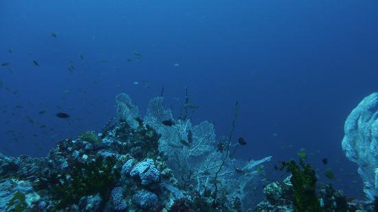 สแกนดี้ ไดเวอร์: Verde island