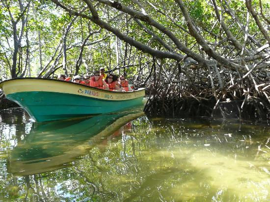 Paradise Island & The Mangroves (Cayo Arena): les  Mangroves