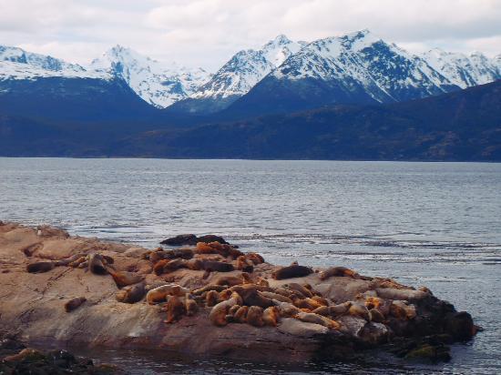 يوشاي, الأرجنتين: Isla de los Lobos Marinos