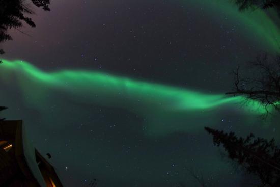 A Moose in the Garden: Aurora 1