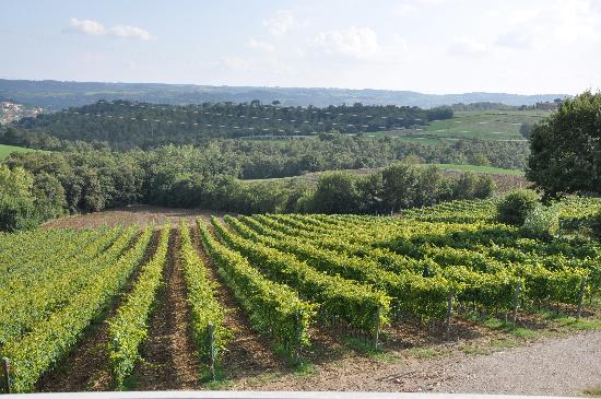 La Poderina dei Poggi : The vineyard