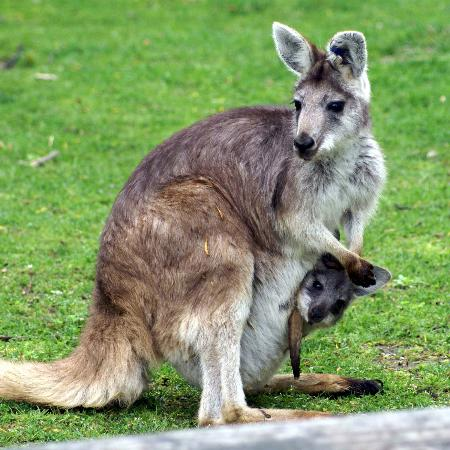 Bloomington, IL: Wallroo & baby
