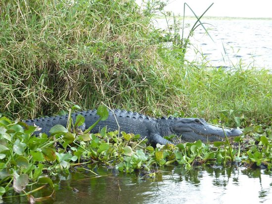 Florida Airboat Excursions