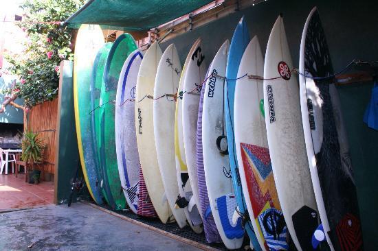 Ubuntu Backpackers: wanna surf?