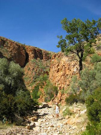 Naukluft Campsite: Olive trail descente