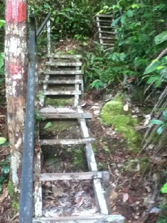 Bako National Park Hostel : part of walk to Kecil beach