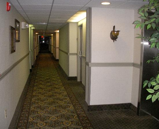 Comfort Inn Madison: Hallway on 2nd floor