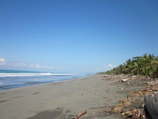 Cabinas Pura Vida: Beach