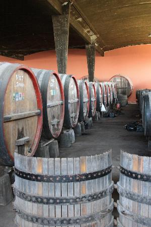 The Wine Experience: Bodega Bernardi