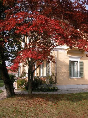 Villa d'Azeglio: Maple tree in the garden