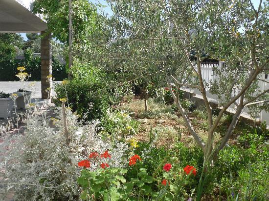 Apartments Vojin: Garden