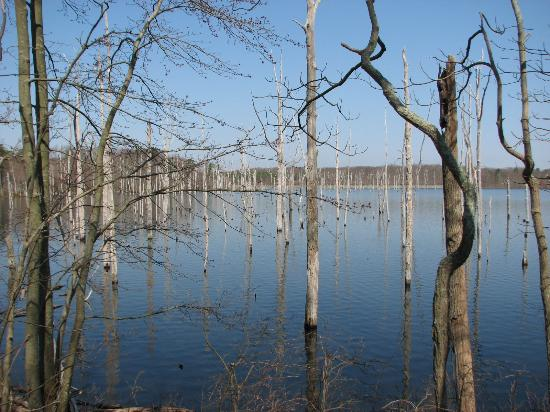 Manasquan Reservoir Visitor Center: Protuding tree trunks on the reservoir