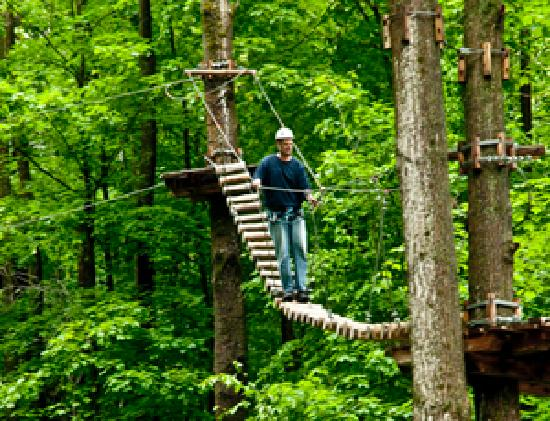 treetop trekking picture of horseshoe resort barrie. Black Bedroom Furniture Sets. Home Design Ideas