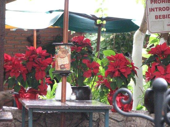 El Bigotes Carnitas el Camino: Beautiful Plants at  El Bigote