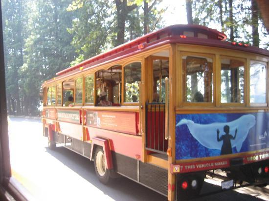 Vancouver Downtown: the trolley around the city, worth it